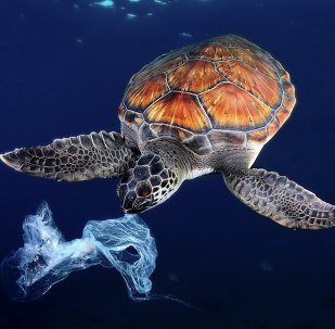 Golden Turtle and Preserving Biodiversity