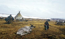 Reindeer breeders' camping ground