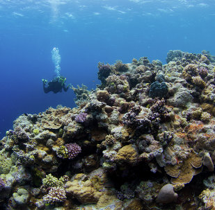A diver swims near the Great Barrier Reef off the coast of Australia.