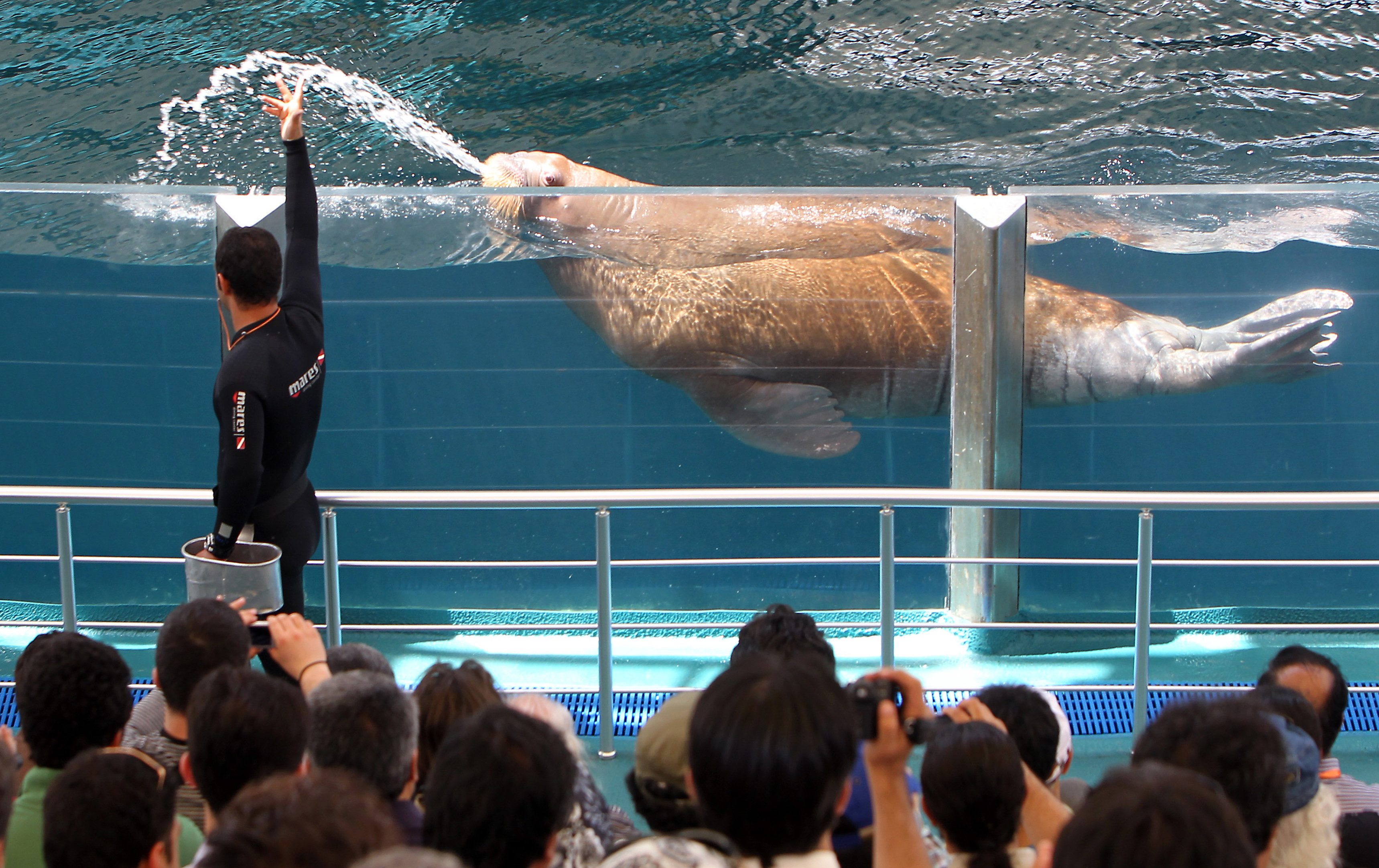 A sea lion performs during a show in the Kish Island resort in the Gulf