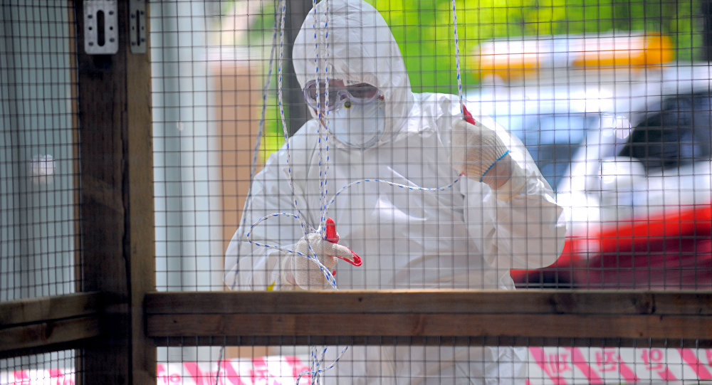 A South Korean quarantine official decontaminates a small aviary, which was hit by bird flu