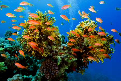 The Red Sea, Egypt