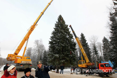 Russia's main New Year tree found and cut down in Moscow region