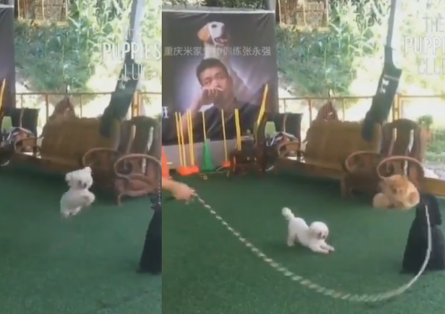 Trio of Talented Pups Jump Rope