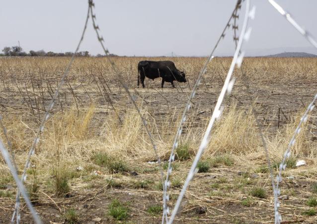 South Africa Marikana Photo Gallery