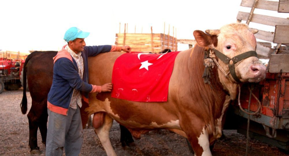 Sacrificial Ox Named After S-400 in Turkey