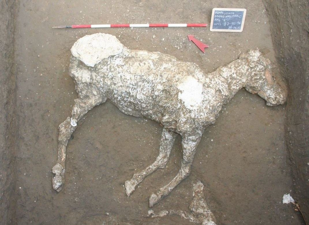 The plaster cast of a horse, discovered in an ancient stable outside Pompeii