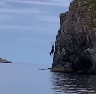 Lucky Escape: Daredevil Moose Jumps off Cliff and Then Swims Away Unbothered