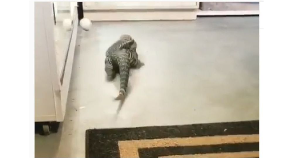 A reptile and a ball