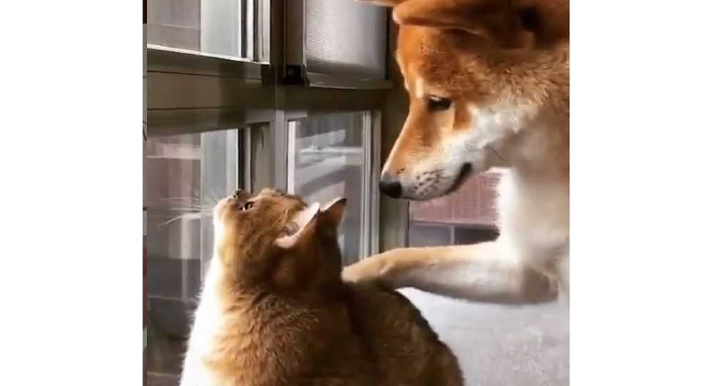A dog and a cat by the window