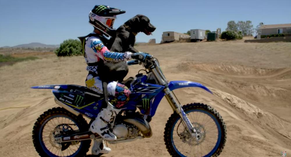 Motorcycle-Loving Dog Goes for Dirt Bike Joy Ride