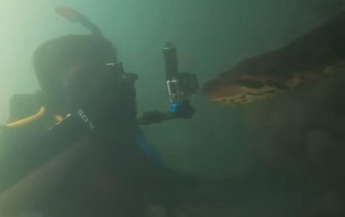 Diver meets anaconda