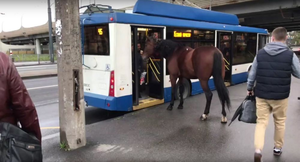 Horse thought to ride trolleybus