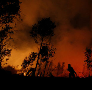Firefighters try to extinguish forest fires at Sebangau National Park area in Palangka Raya, Central Kalimantan province, Indonesia, September 14, 2019