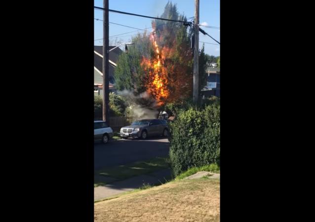 Washington State Power Line Sets Tree on Fire