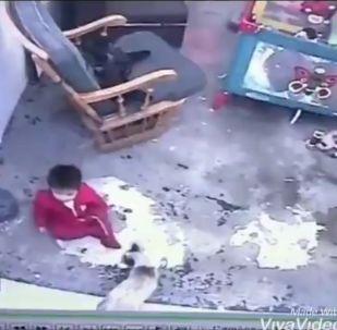 A screenshot from a video. A cat saves a toddler.