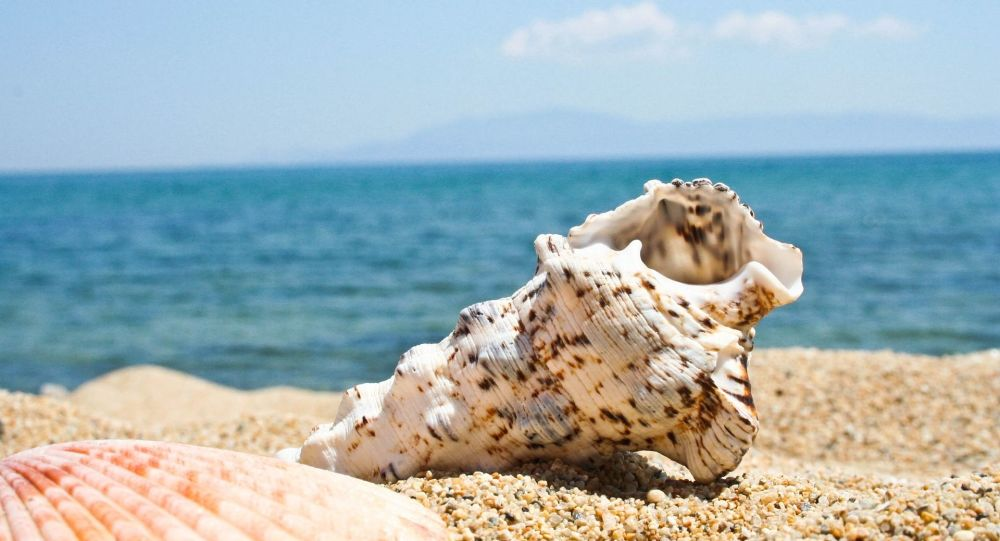 Seashell Horn Can Still Play A Tune After 18,000 Years, Archaeologists Say