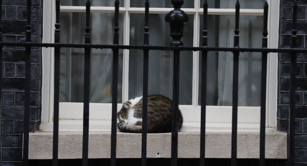 UK's Chief Mouser Larry Marks Decade in Office at Downing Street
