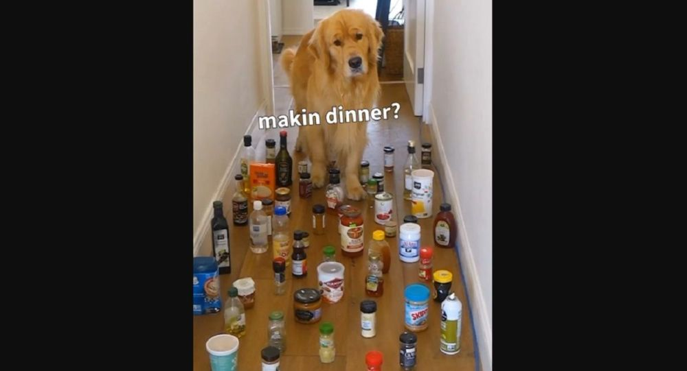 Danger Zone! Adorable Golden Retriever Gets Through Minefield of Cans and Bottles