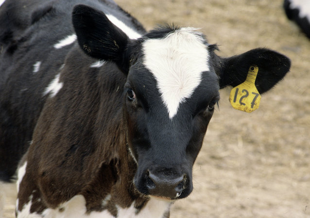 Russia becomes largest beef importer for Uruguay in 1st half of 2010