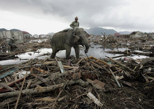 An elephant which belongs to forest ministry removes debris in Banda Aceh, Indonesia