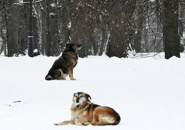Russian dog-hunters plan to organize a nationwide killing of stray dogs across Russia on Tuesday. Dog-owners and animal rights activists are on high alert