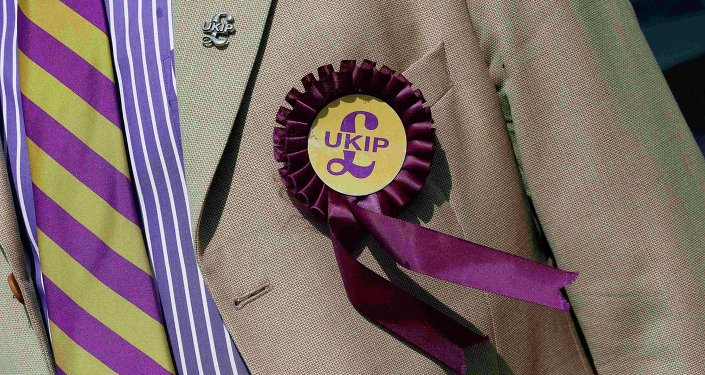 A supporter is seen wearing a United Kingdom Independence Party (UKIP) badge