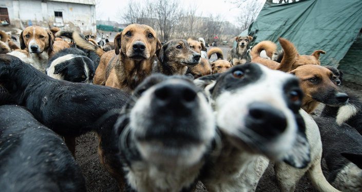 A picture taken on January 28, 2014 shows stray dogs, among the 450 which have found shelter and food in improvised shelter operated only by volunteer in Nis, 200 km south of Belgrade