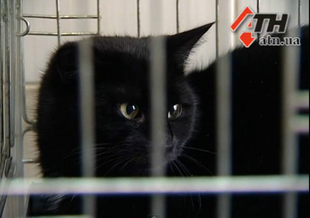 This feline fiend went on a taste-testing party at a meat processing plant in Kharkov, Ukraine, consuming nearly $400 US worth of premium delicacies over several days before being caught.
