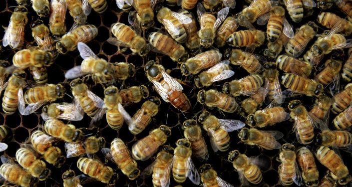 Honeybees in Danger