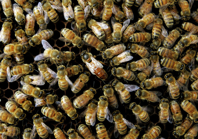Honeybees in Danger