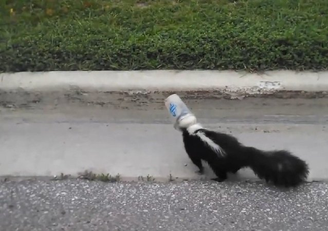 Driver rescues skunk with head caught in plastic cup