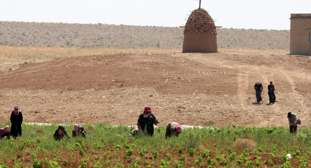Women farmers work at Omar Zumot organic wine vineyard in Sama al-Sarhan, northern Jordan