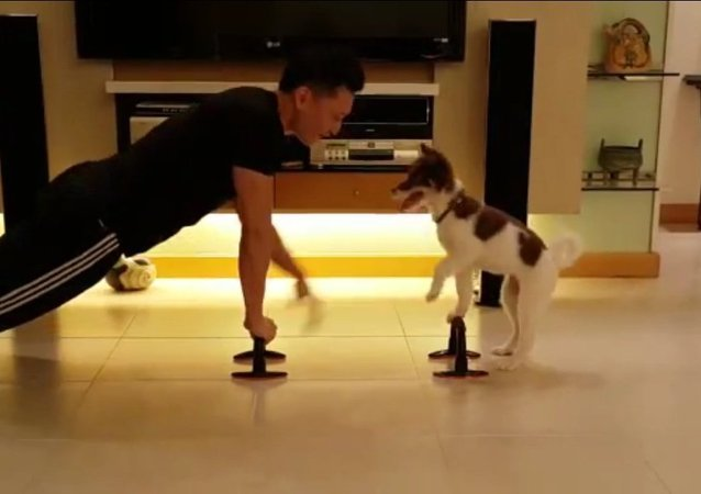 Fitness exercise with your dog