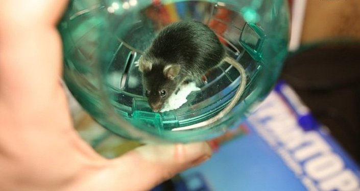 A mouse named Shum became the latest furry creature to take off from the Earth