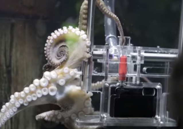 Say Cheese: For $2 Bucks This Octopus Will Take Your Picture
