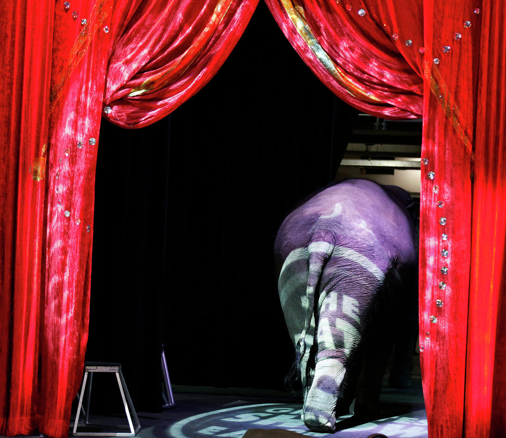 Where Magic Meets Reality: History of Circus