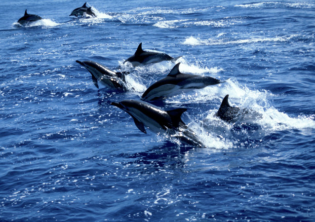 Dolphins can be as picky about their friends as a high school cheerleader.