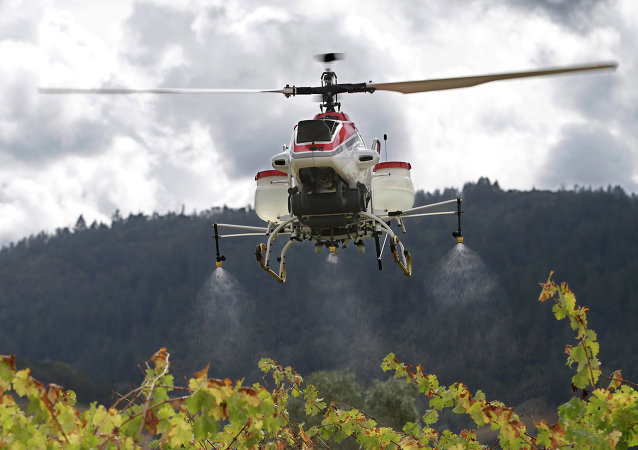 Yamaha RMax unmanned helicopter sprays water over grapevines during a demonstration of its aerial application capabilities at the University of California