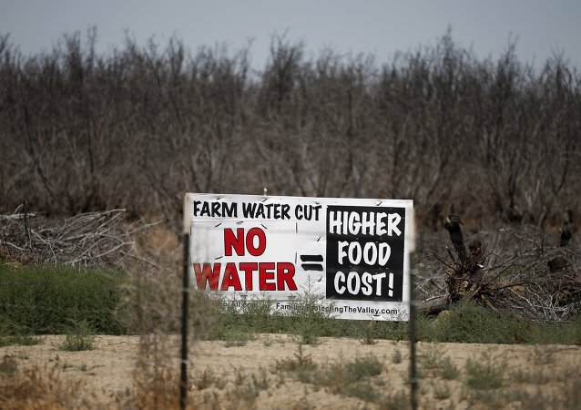 A water protest sign is seen in front of a field of dead trees in Coalinga, California, United States May 5, 2015
