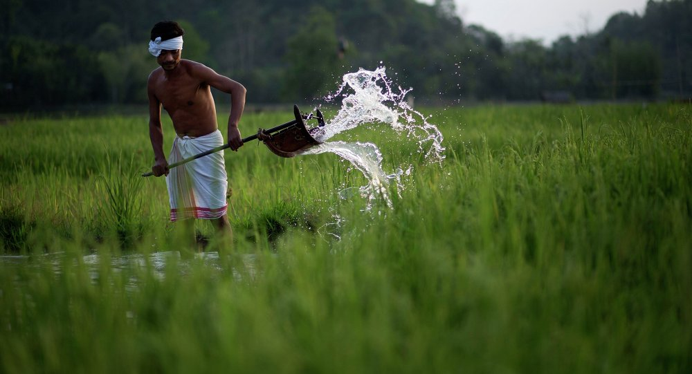 Indian farmer Moneswar Kathar irrigates his paddy field at Khetri village about 40 kilometers (25 miles) east of Gauhati, India, Wednesday, April 22, 2015
