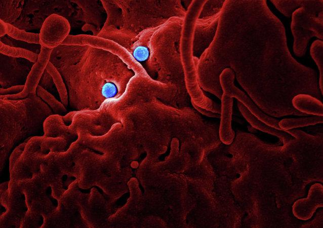 MERS Coronavirus Particles
