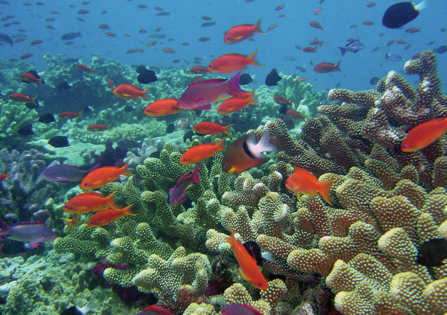 Rainbow Reef, Fiji
