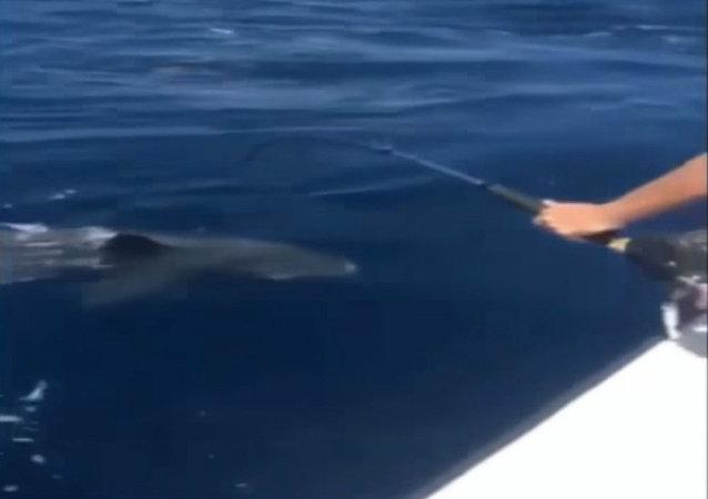 Robin van Persie caught a massive shark