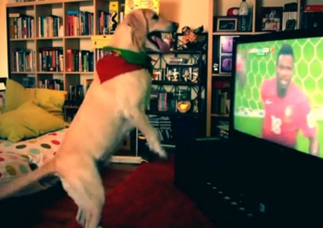 Dog reacts to a goal of Portugal