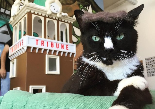 Trump Your Cat flashmob
