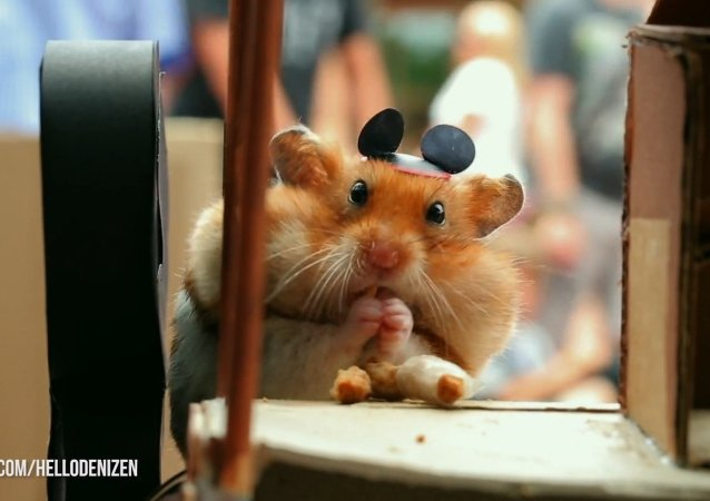 Tiny Hamster's Best Day Ever at Walt Disney World