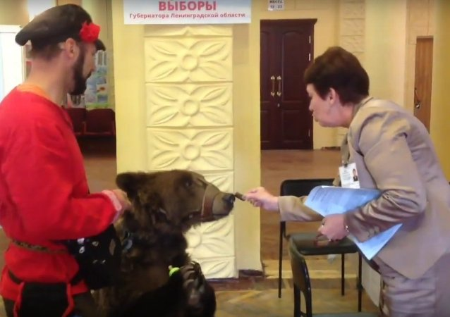 Bear at a polling station