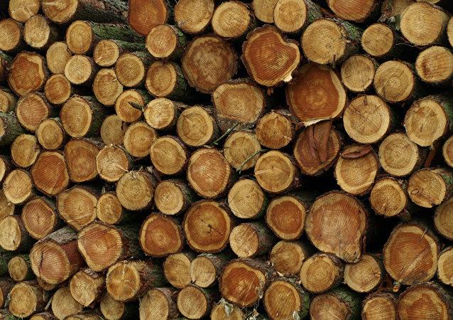 Roadside Timber Stack