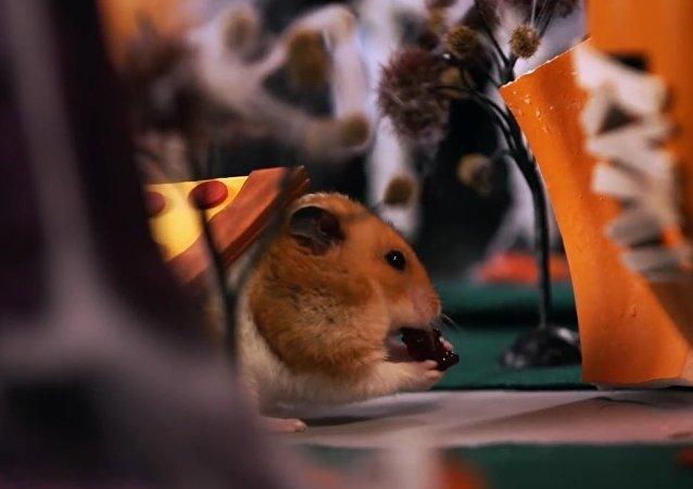 Tiny Hamster's Halloween